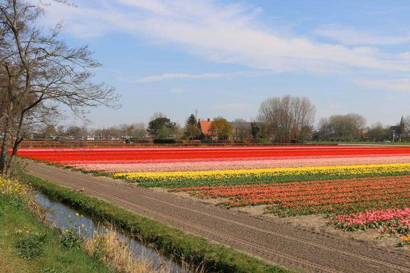Flower fields Holland 9 April 2019