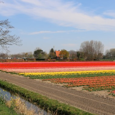 Flower fields Holland 9 April 2019