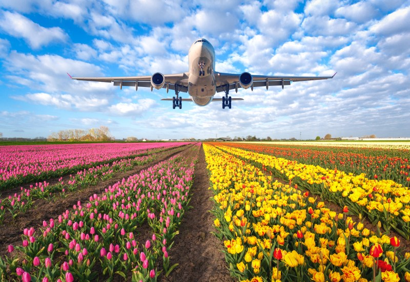 Flights to the tulips in Amsterdam