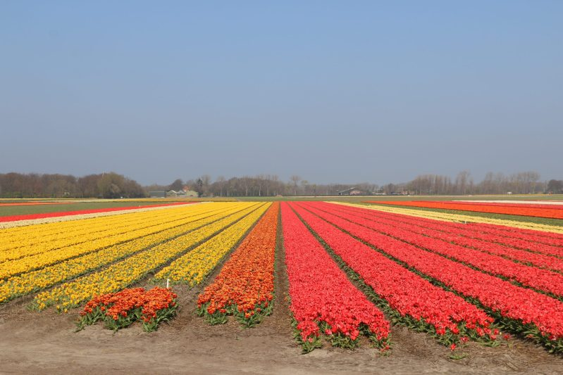 Flower status 22 april