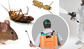 شركة مكافحة حشرات بالفجيرة