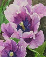 Tulips: The Inside Story | Cindy Bender