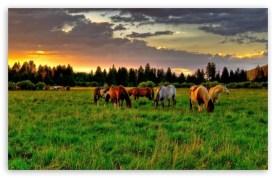 horses_grazing_in_a_field-t2