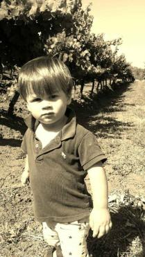 My little man hanging out in the vineyard