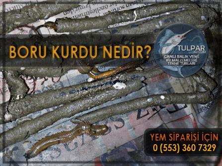 Boru Kurdu nedir?