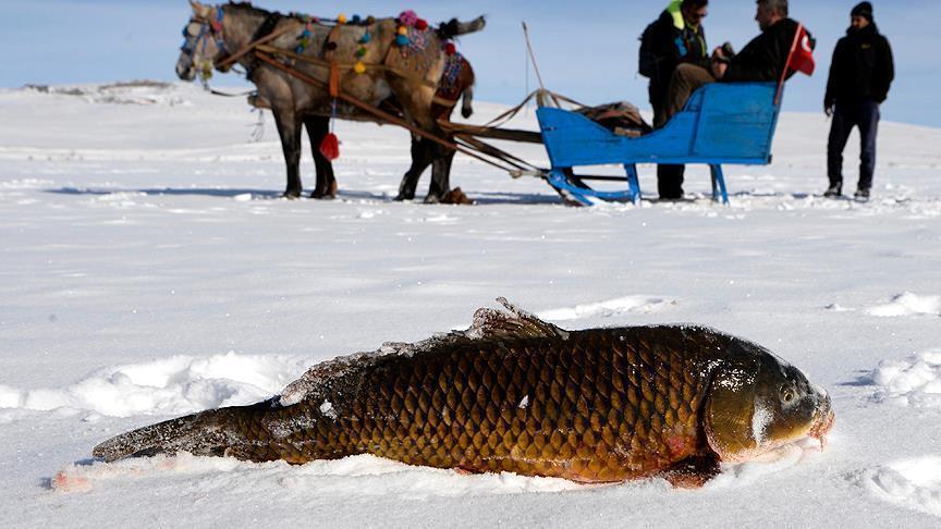 Eskimo Balıkçılık