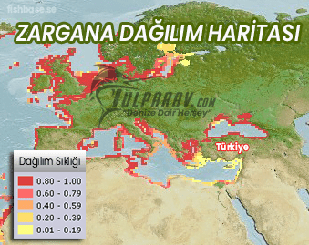 Zargana Dağılım Haritası