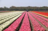 Blumenprognose holland