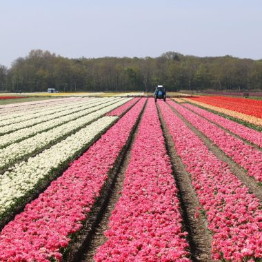 Blumenprognose holland