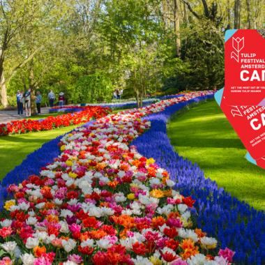 Tulip Festival Card Amsterdam