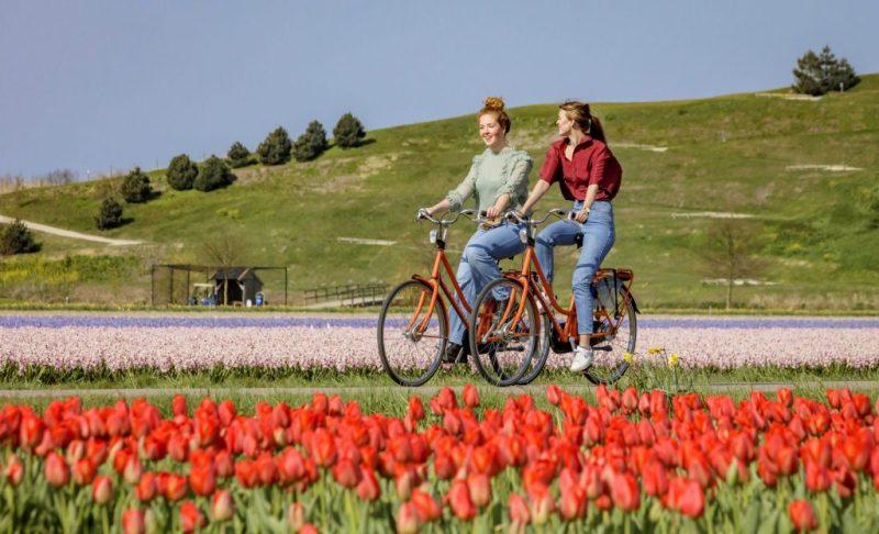 Fahrradtour entlang der Tulpenfelder bei Amsterdam