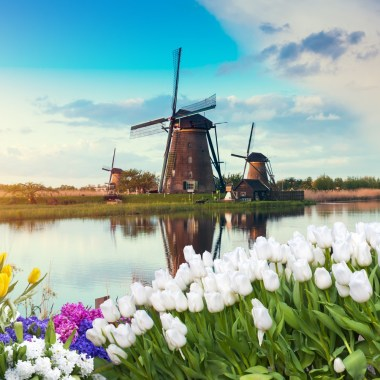About tulpenfest Amsterdam