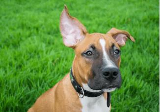dog ear up