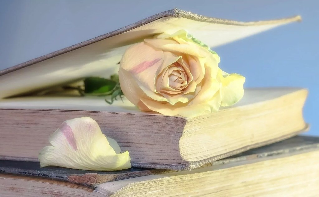 rose, book, old book