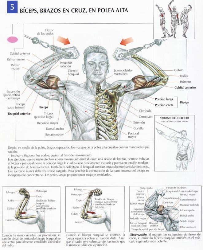 biceps-brazos-cruz-polea-alta_1
