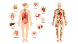 Is Physiology A Good Course In Nigeria : Answered