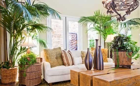 Come scegliere le piante adatte a purificare la tua casa