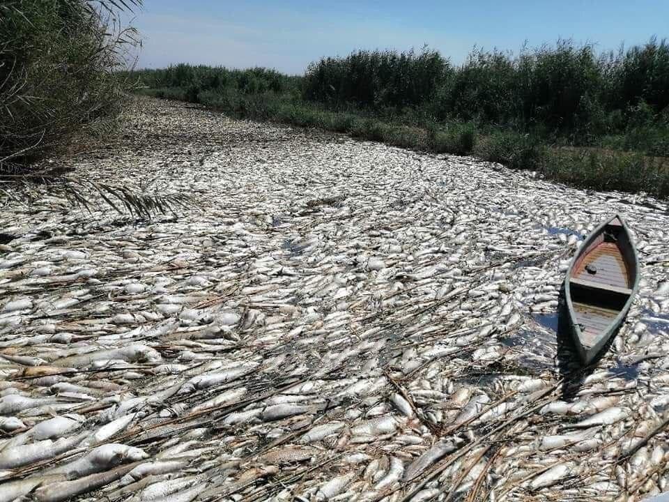 Irak'ta onlarca ton balık telef oldu
