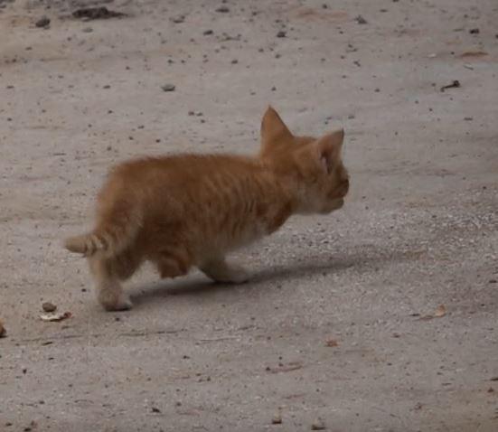 Tunceli'de 3 ayaklı kedi 2 ayaklı yavru doğurdu