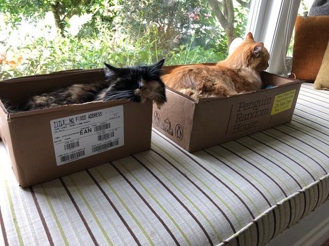 susin nielsen_cats