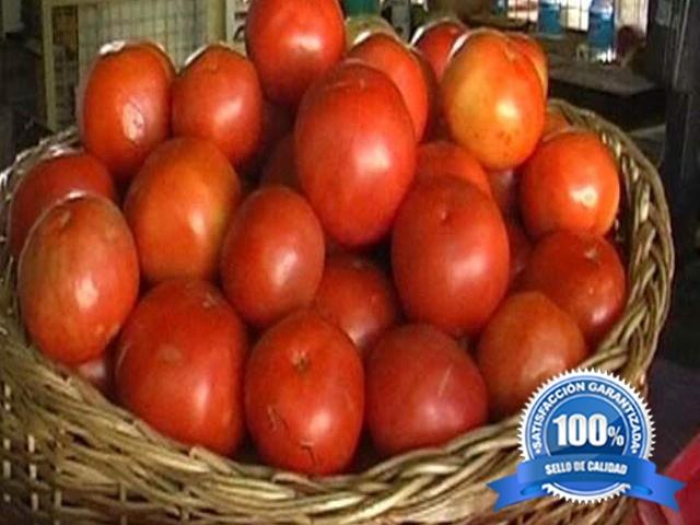 Tomate Platense