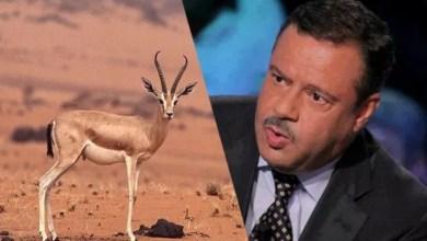 Photo of وزير الفلاحة: الصحراء التونسية لا يوجد فيها غزلان