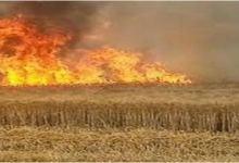 Photo of السيطرة على حريق اتى على هكتارين من الشعير تابعة لشركة إحياء في الحفصية ببرج العامري