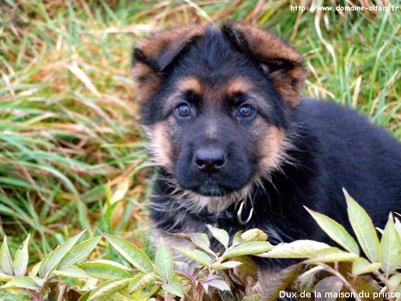 8039066 orig Photos Of Pitbull Dogs