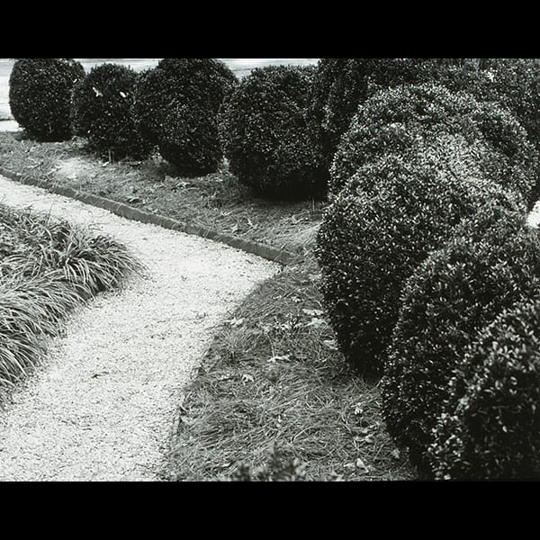 Boxwoods and path in the Boxwood Garden at the Swan House in Atlanta, Georgia, historic restoration by Tunnell and Tunnell Landscape Architecture.
