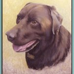 Thomas Adamski portrait of dog