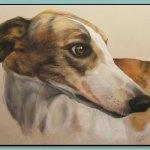 Greyhound Portrait by Thomas Adamski