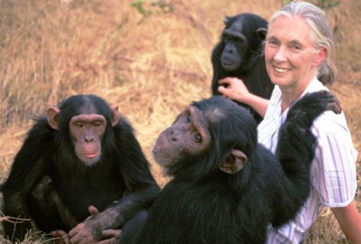 Jane-Goodall (1)