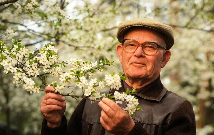 Adulto Mayor  feliz con su árbol de cerezo, sakura.  Foto cortesía nejron