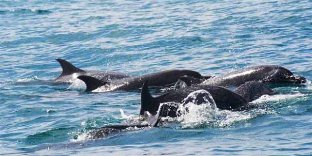 Planeta-Vital-delfines-ballenas-
