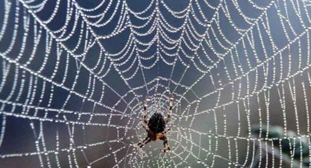 Tela de araña, una obra tecnológica de la naturaleza