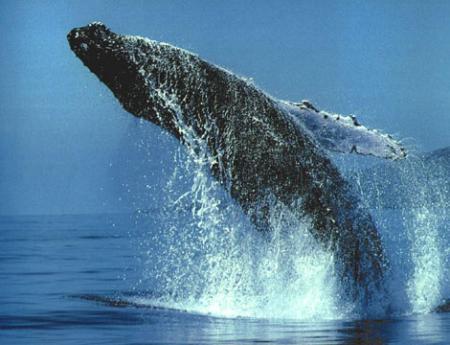 La ballena merece seguir en libertad