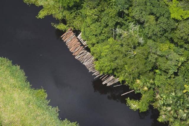 Una selva en depredación. Foto Greenpeace