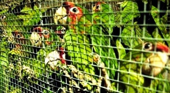 El tráfico de animales un crimen planetario