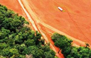 Muchos intereses económicos y políticos se suman para acabar con la Amazonia. Foto INPA