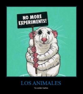 2-experimentacion