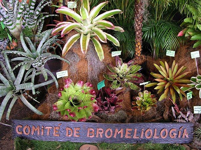 Bromeliología