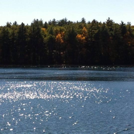 Walden Pond, Massachusetts, Foto Planeta Vital