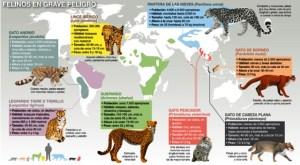 Mapa de de felinos en extinción
