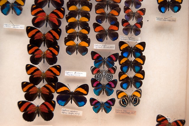 Multicolores mariposas en el MIZA Foto cortesía Marco Gaiani