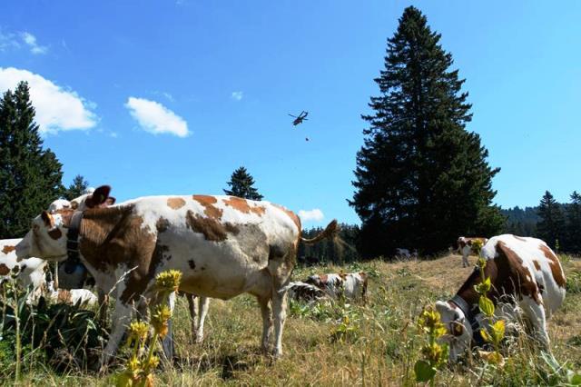 Sequía violenta deja a las vacas en estado vulnerable. Foto: http://informactiva.mx