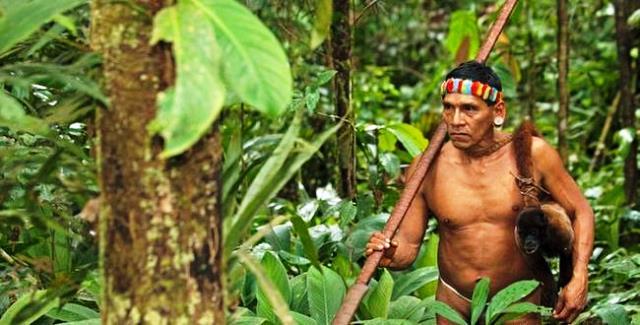 El manejo sostenible de los bosques. Foto: www.dw.com