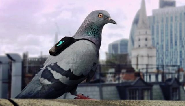 Palomas sensoras de contaminación