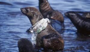 Plástico nefasto para nuestros océanos y sus habitantes