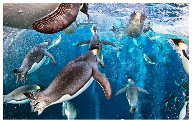 Mar de Ross uno de los mas biodiversos del planeta