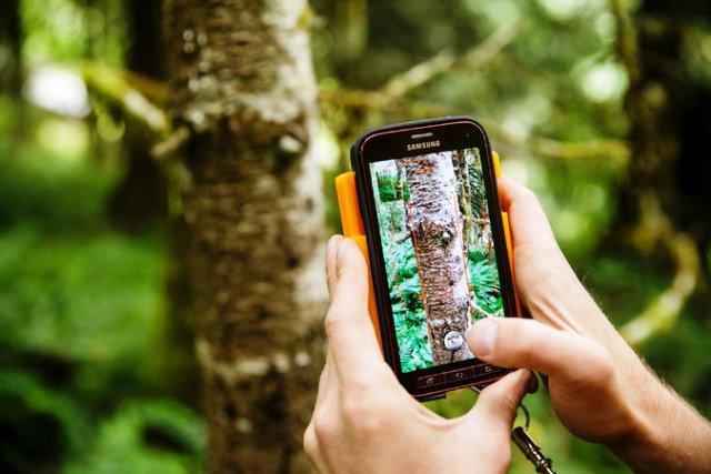 Inventariando los bosques
